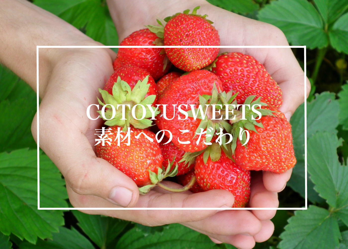 心優-cotoyu sweets-の素材へのこだわり